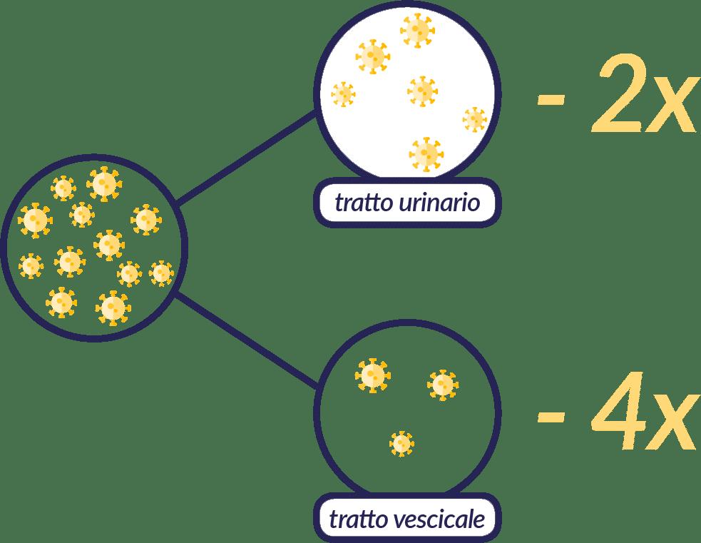 Riduzione della carica batterica con Mannocist-D